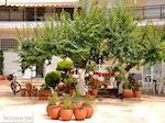 Limenas  - Thassos stad |Griekenland | Foto 1