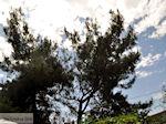 Prinos en Skala Prinos | Thassos | Foto 13